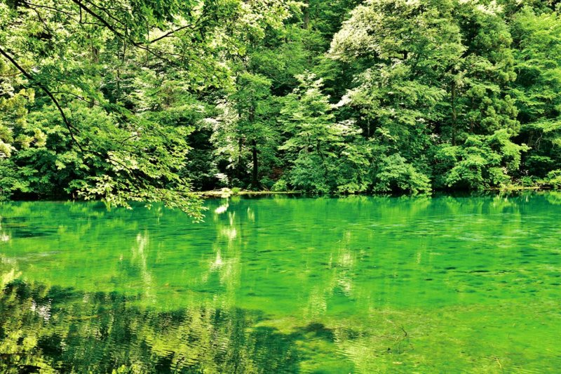 透明度抜群で綺麗すぎ!! 新潟県津南町の秘境池「龍ヶ窪の池」に行ってみたい!