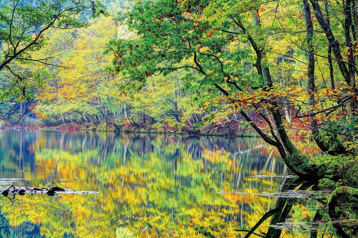 新潟県津南町・紅葉の「龍ヶ窪の池」