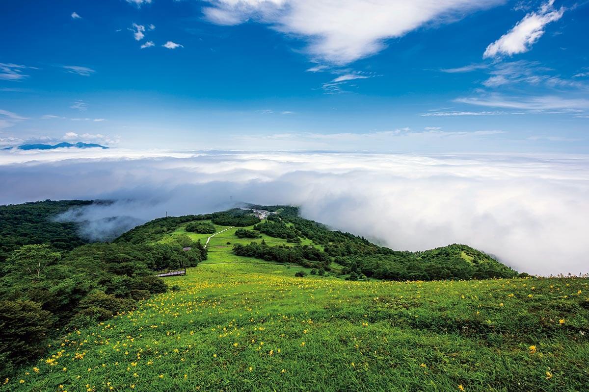 日光霧降高原 キスゲ平のニッコウキスゲと雲海