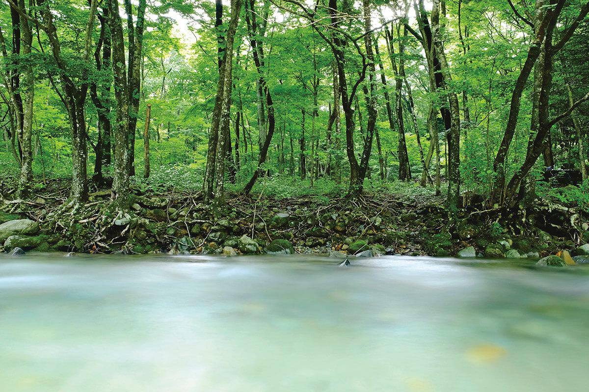 那須の清流・木の俣川 夏の景色