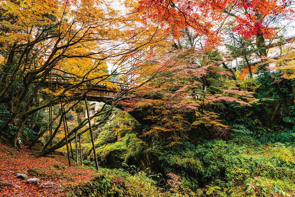山中温泉・紅葉のこおろぎ橋