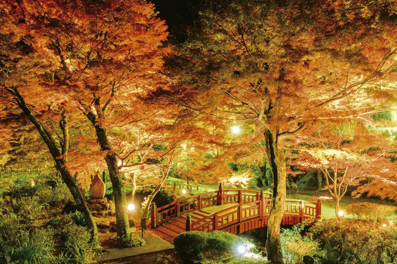 紅葉狩りに行きそびれたら静岡県熱海市「熱海梅園」へ!! 日本で最も遅い紅葉を見に行こう!