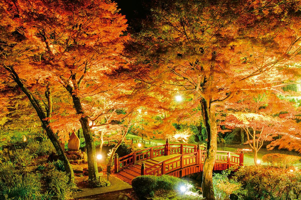 熱海梅園の紅葉 ライトアップ