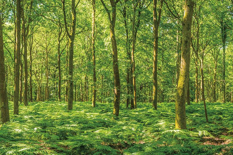 森林(イメージ)