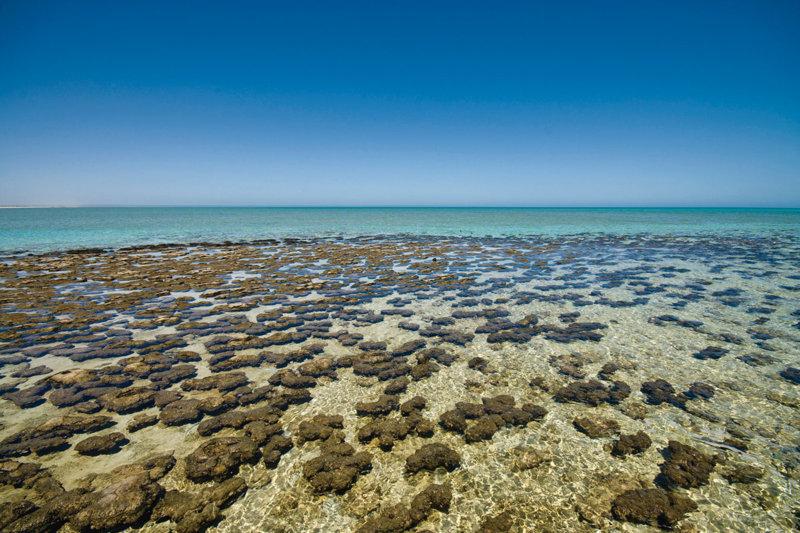 壮大な自然の中でリフレッシュ! 一生に一度は訪れたい。 西オーストラリアの世界遺産「シャークベイ」