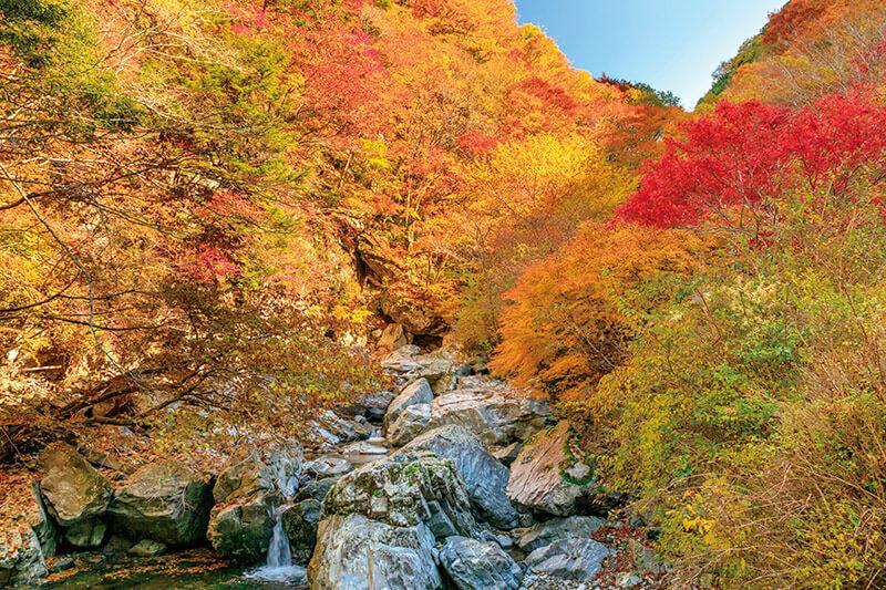 みたらい渓谷 紅葉