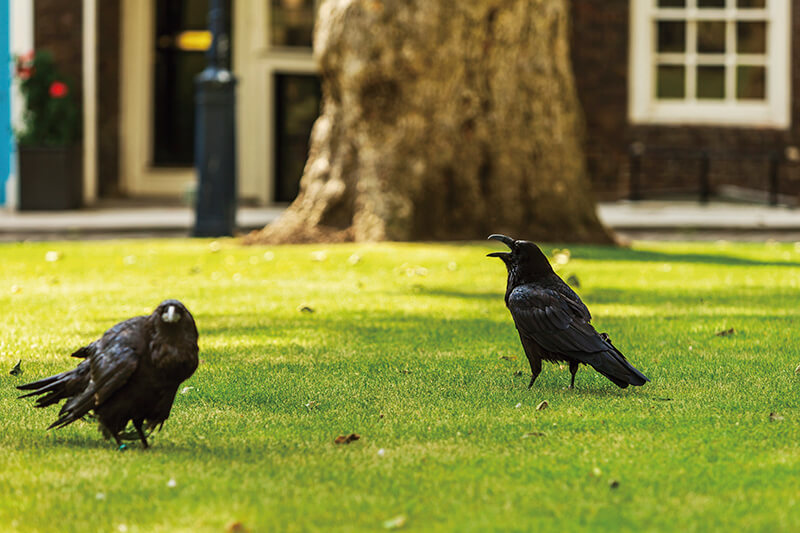The Ravens(レイヴン)