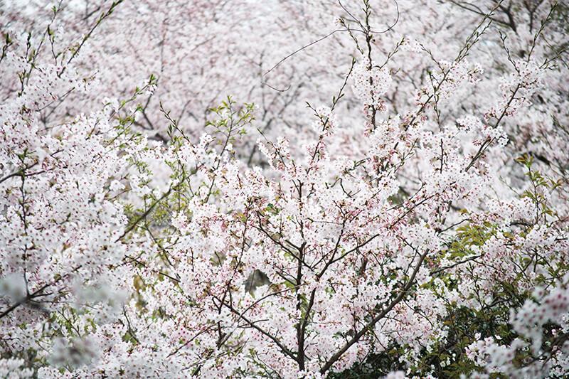 糸島市 笹山公園