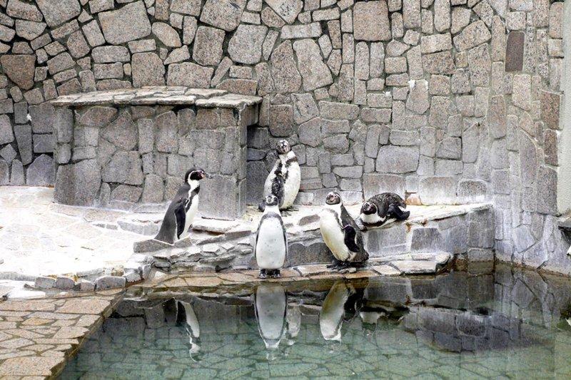 入園無料!! なのにタップリ遊べる!! 江戸川区「自然動物園」でレッサーパンダやプレーリードッグ、ペンギンに会おう。