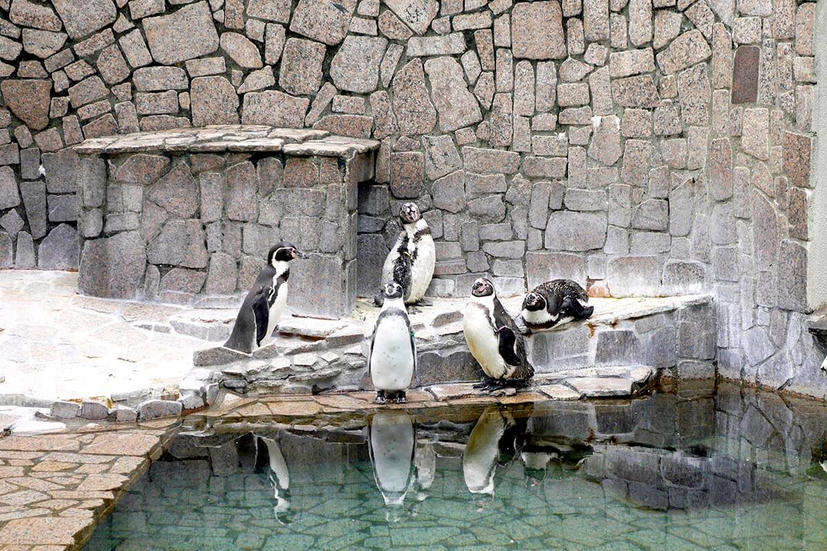 自然動物園・ペンギン