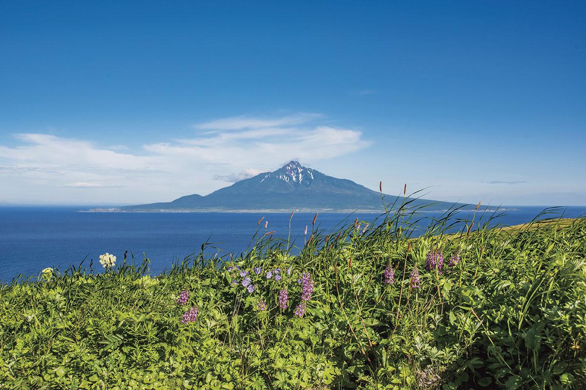 北海道 礼文島・花々越しに見える利尻富士