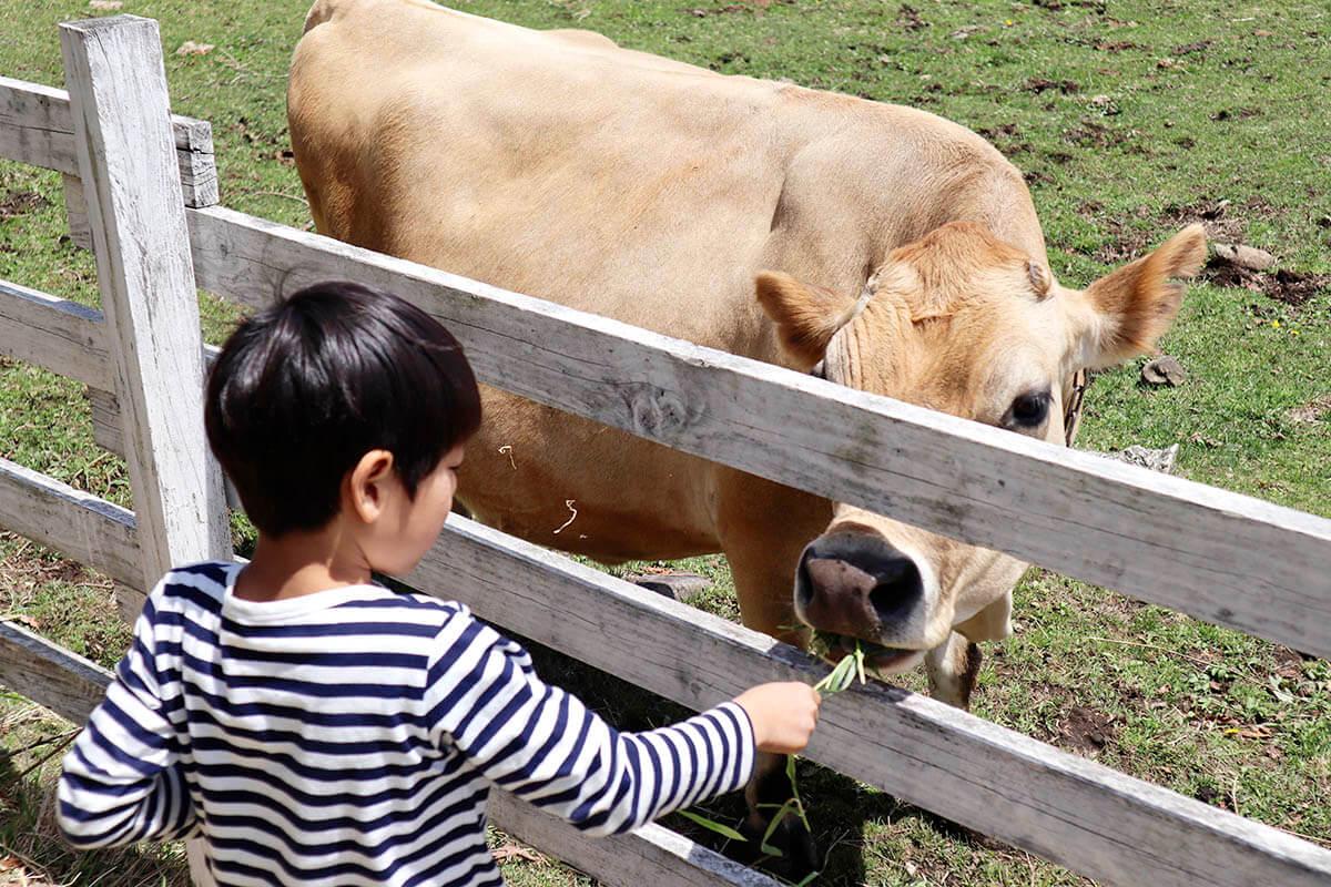 清泉寮 動物と触れ合う子供