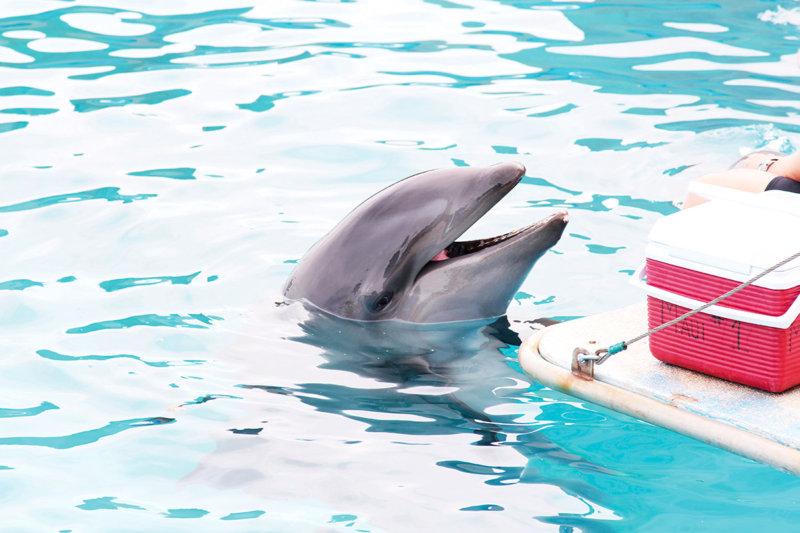 イルカと泳ぐプログラムが大人気!! ハワイの「シーライフ・パーク・ハワイ」を満喫しよう。