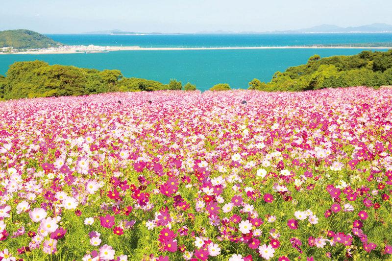 福岡旅行のおすすめスポット! 博多湾に浮かぶ能古島の「のこのしまアイランドパーク」
