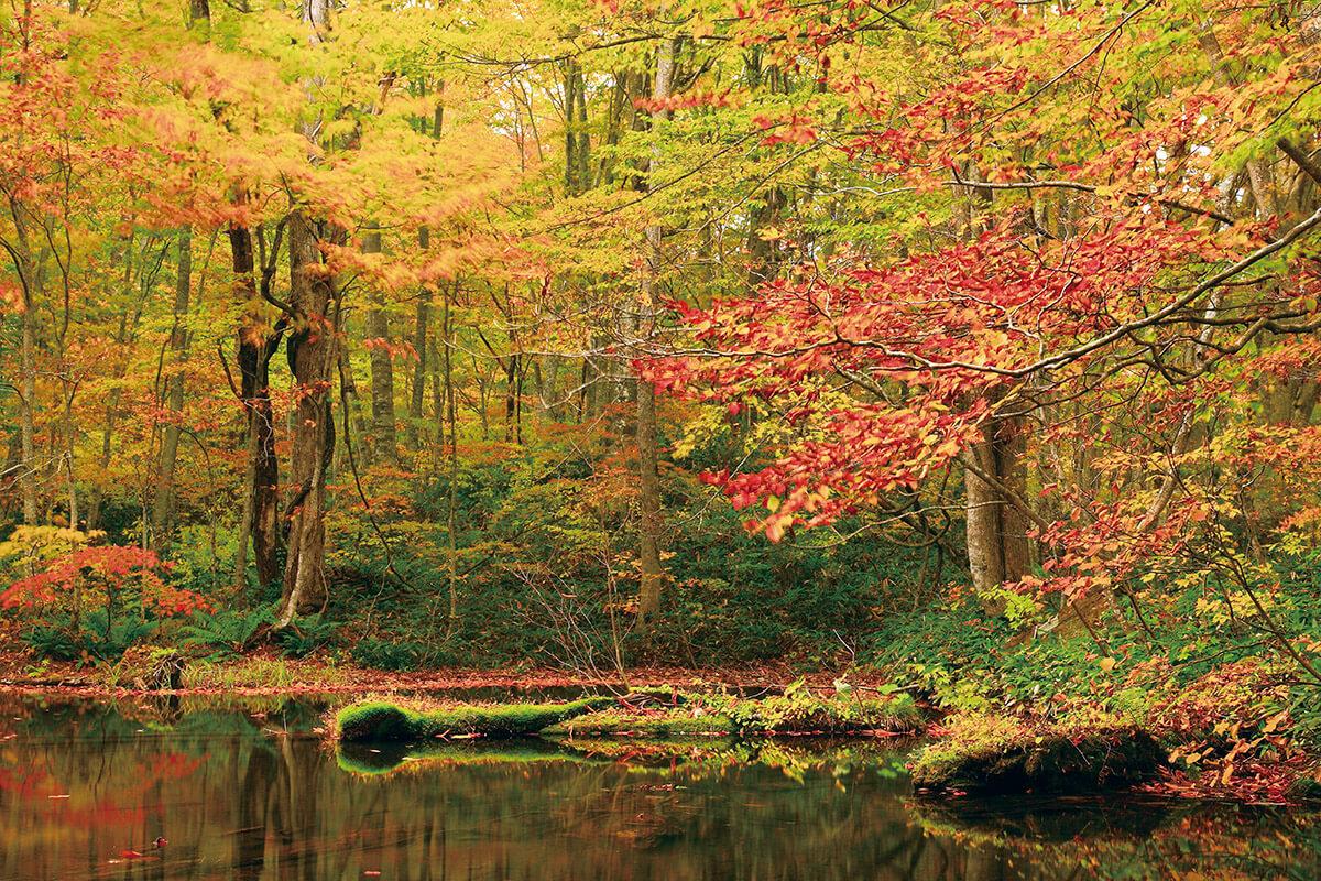 鏡沼の紅葉