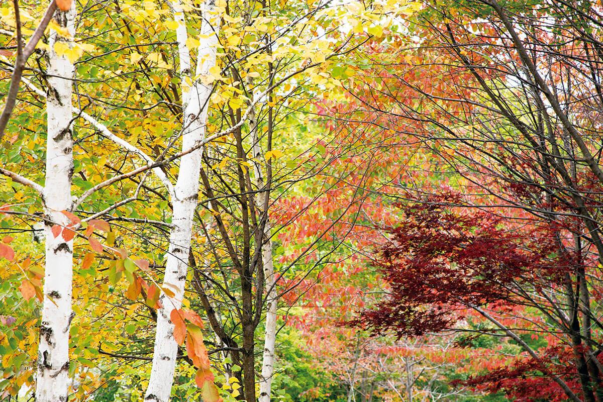 鍋平高原 紅葉