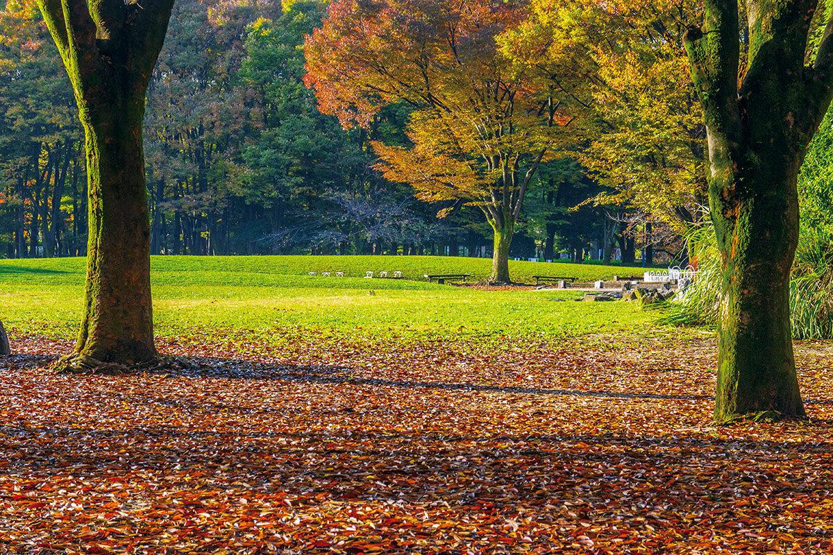 落ち葉が散る名城公園