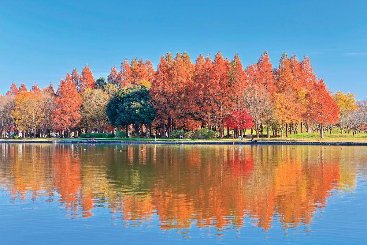 水元公園から望むみさと公園