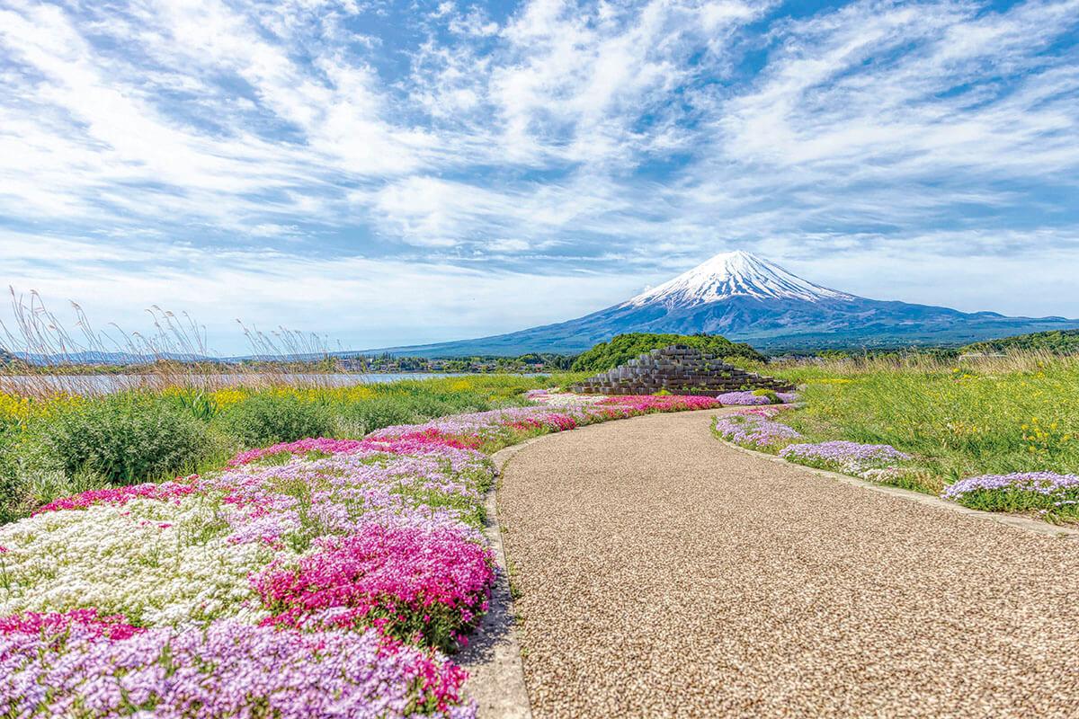 大石公園 芝桜