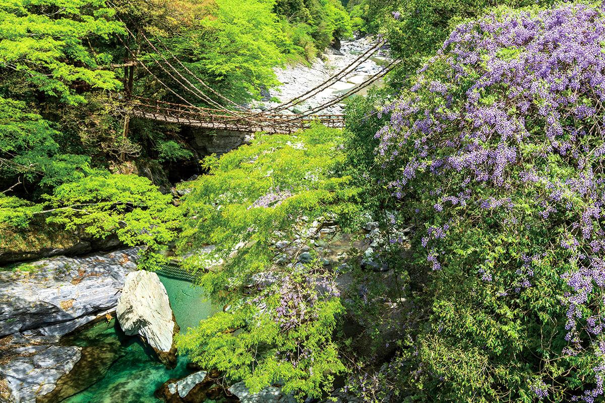 春の祖谷のかずら橋