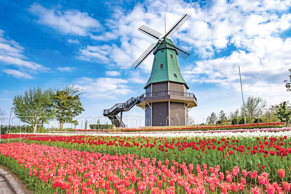 霞ヶ浦総合公園 風車とチューリップ