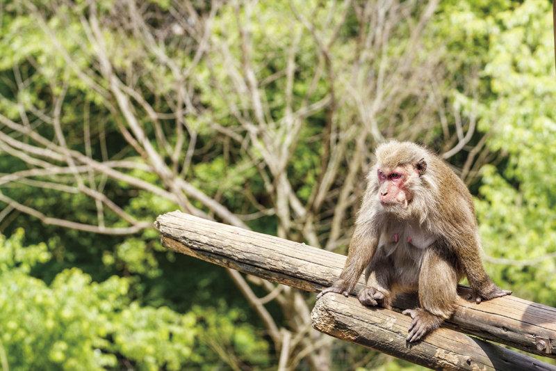 世界屈指のサルの動物園! 愛知県犬山市にある「日本モンキーセンター」をご紹介