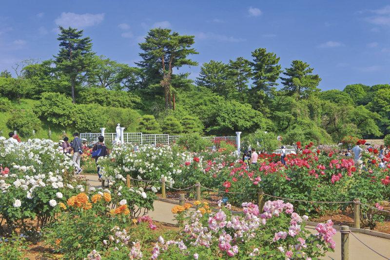 東京から近い自然スポット!!  神奈川県川崎市「生田緑地」のさまざまな施設を楽しもう!