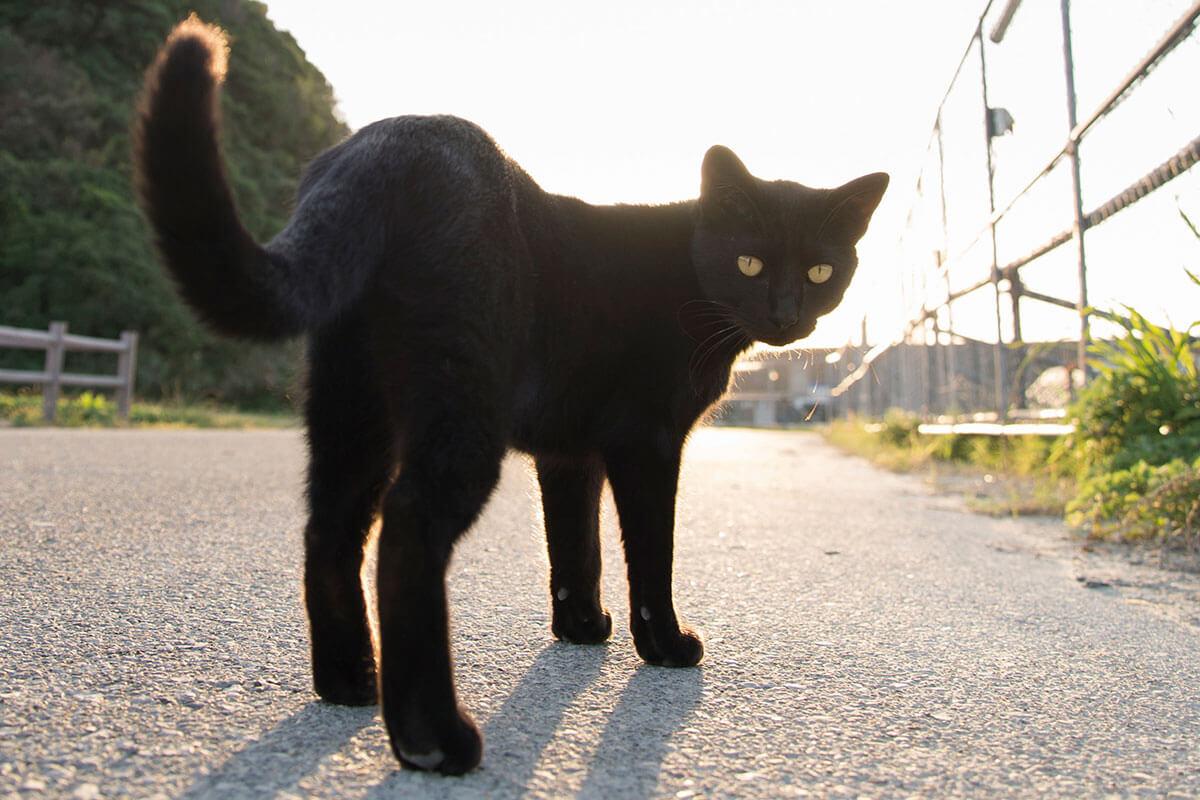 黒猫(イメージ)