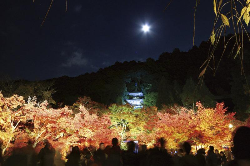 京都東山の名刹「永観堂」の四季折々の魅力をご紹介! ライトアップや春の桜、初夏の紅葉!? を満喫しよう