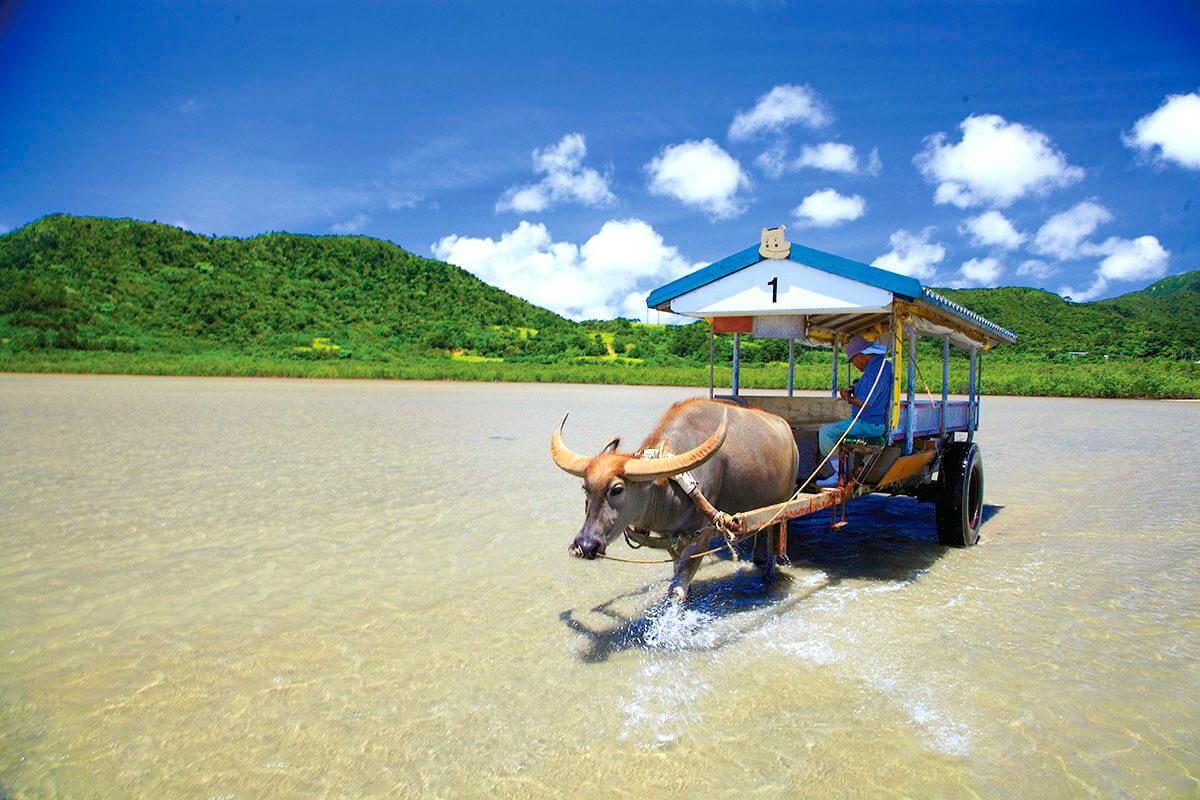 西表島 水牛車
