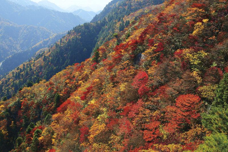 秋のおすすめスポット! 三重県「御在所岳」は、山頂からふもとまでの紅葉を満喫できる!