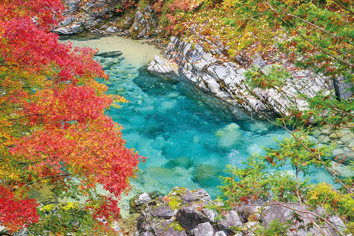 阿寺渓谷 亀石の紅葉