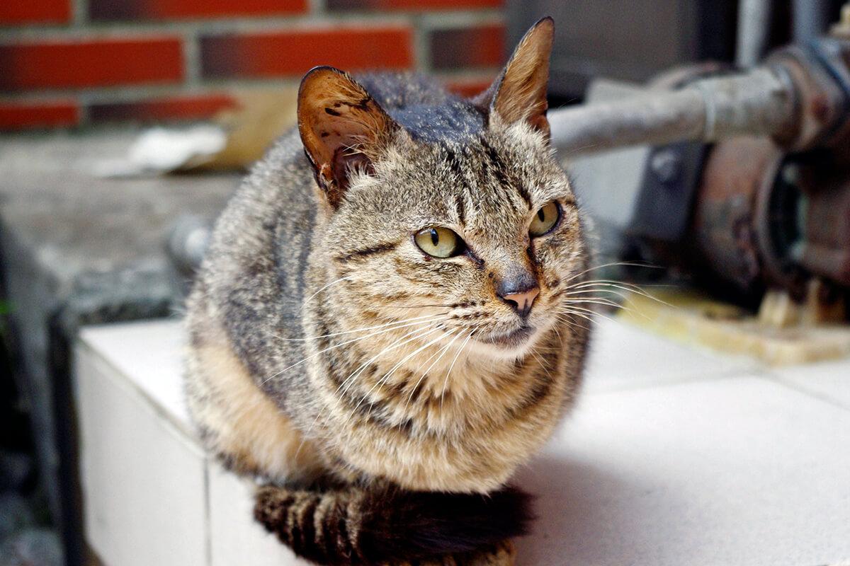野良ネコ(イメージ)