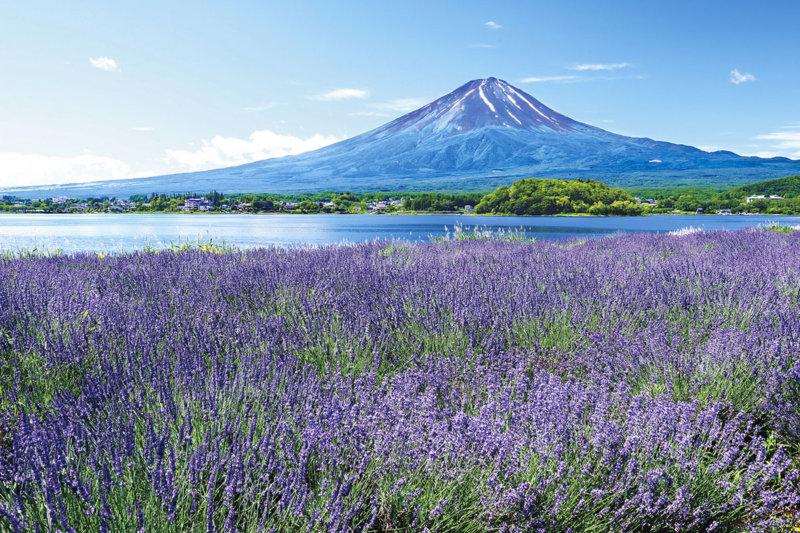 山梨県の富士山観賞スポットご紹介! 河口湖のほとりにある大石公園で季節ごとの景色を楽しもう!