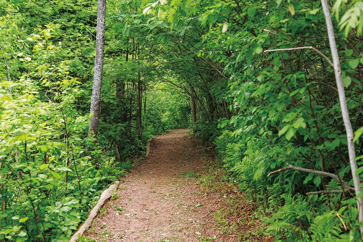 プリンスエドワード島 お化けの森