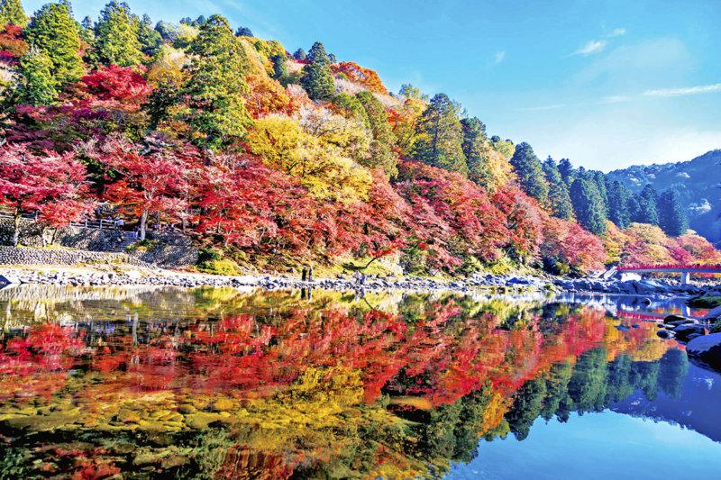 夜はライトアップも開催! 東海随一の紅葉スポット、愛知県豊田市の「香嵐渓」に行ってみよう