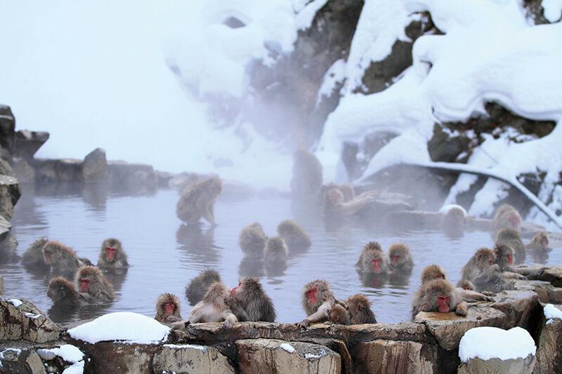 地獄谷野猿公苑 温泉に浸かる猿