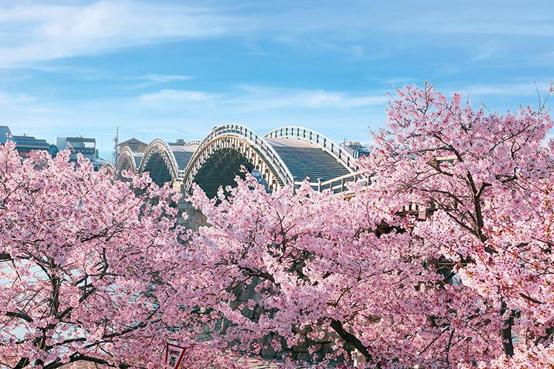 山口県岩国・春の錦帯橋