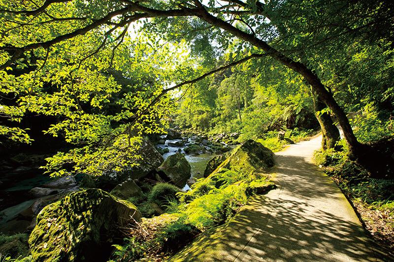 雄川の滝 雄川の滝展望所への遊歩道