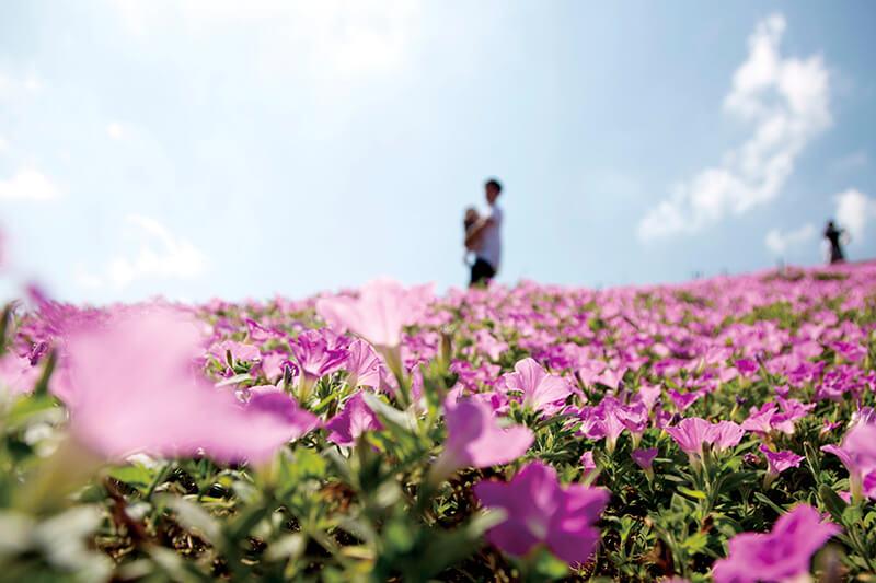 マザー牧場の花畑
