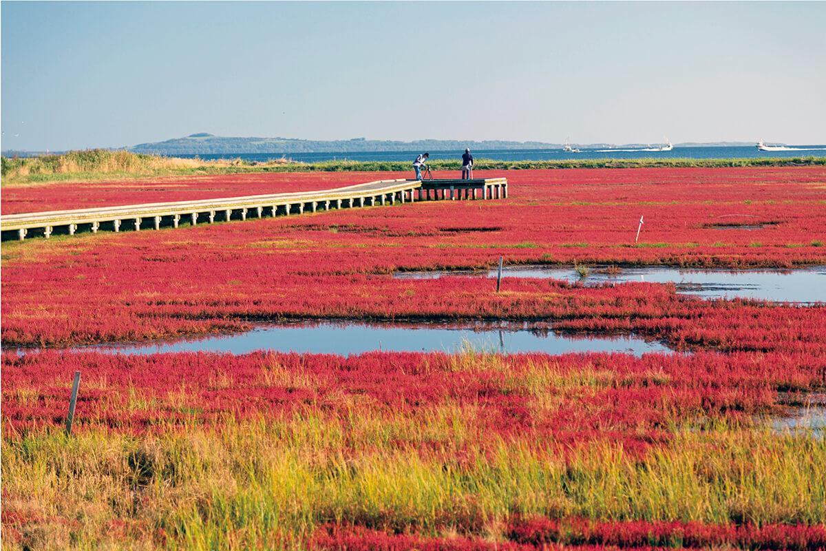 能取湖畔卯原内(のとろこはんうばらない)サンゴ草群生地