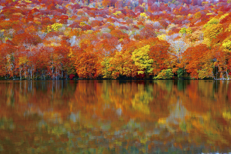 水面に映る燃えるような紅葉が美しい! 青森の秘境「蔦沼」周辺で温泉と散策を楽しもう