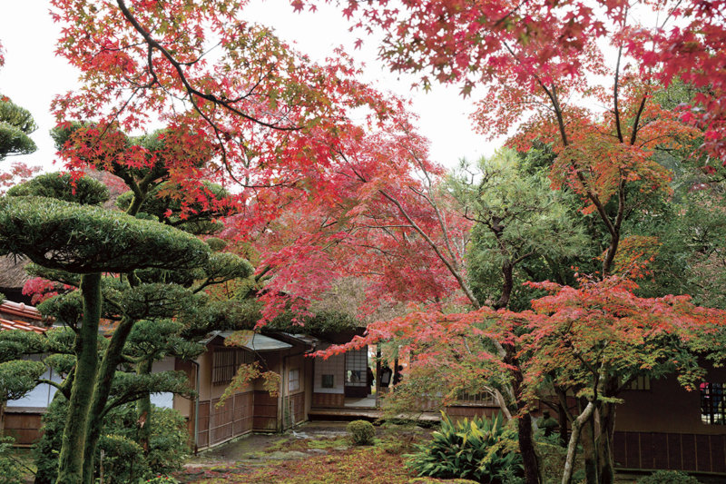 期間限定の美しさ! 佐賀県の紅葉の名所「九年庵」で日本の美を味わう