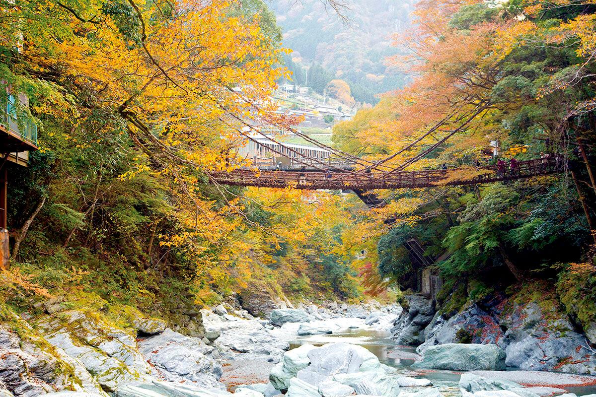 秋の祖谷のかずら橋
