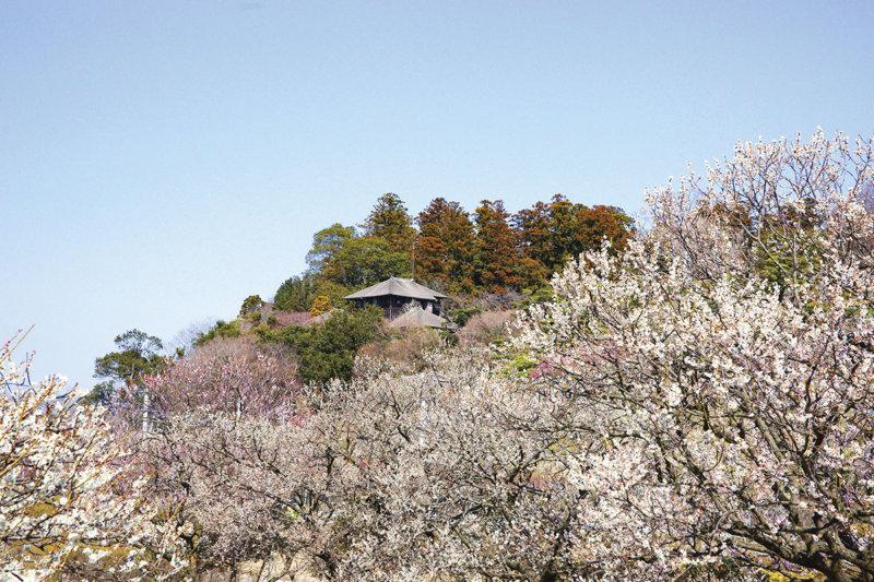 2月は梅が見頃!! 偕楽園「水戸の梅まつり」と合わせて茨城県の庭園やグルメを楽しもう!