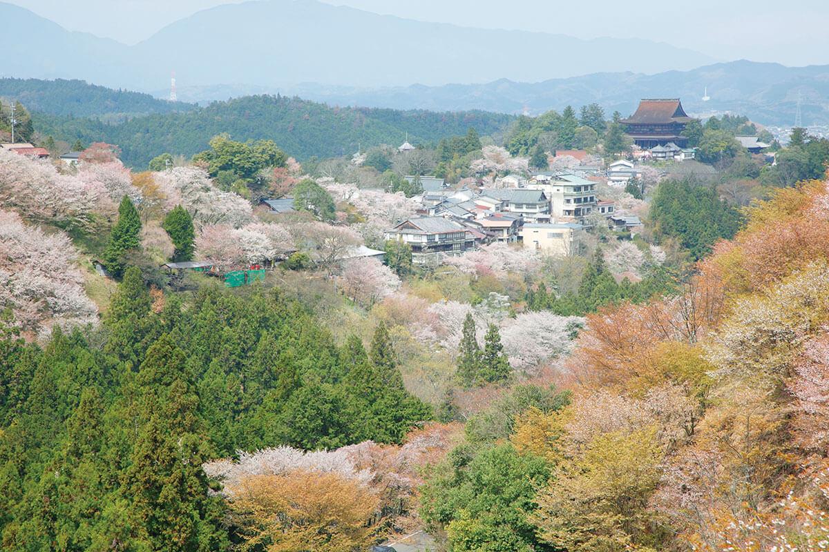 吉野山 上千本から 金峯山寺蔵王堂(2015年)