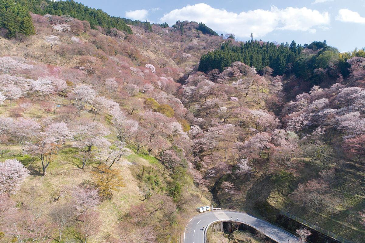 吉野山 中千本から上千本方面(2017年)
