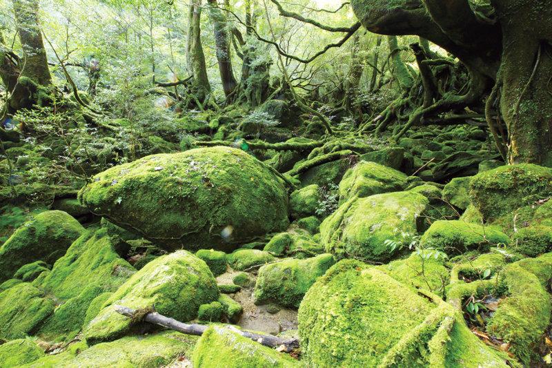 苔の森を歩こう!! 屋久島トレッキングのおすすめ「白谷雲水峡」コース