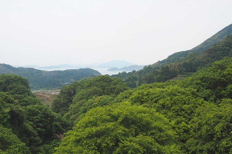 加茂ゆらりんこ橋から望む景色 photo by マッキー