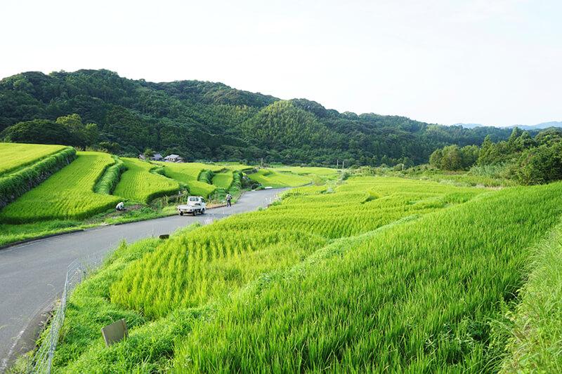 二丈地区の棚田 photo by Chiharu Hatakeyama